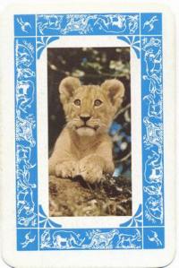 Kenya Karata