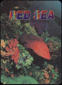 The Wonder of the Red Sea